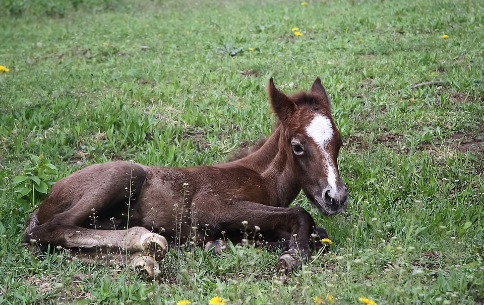 Gestation and birth