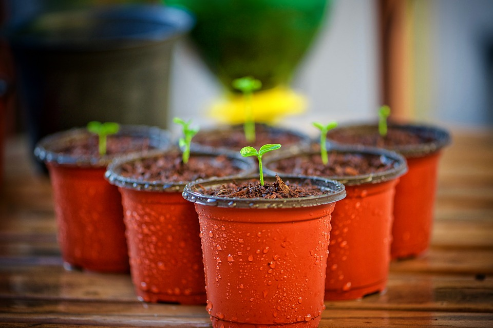 Propogation by Cuttings