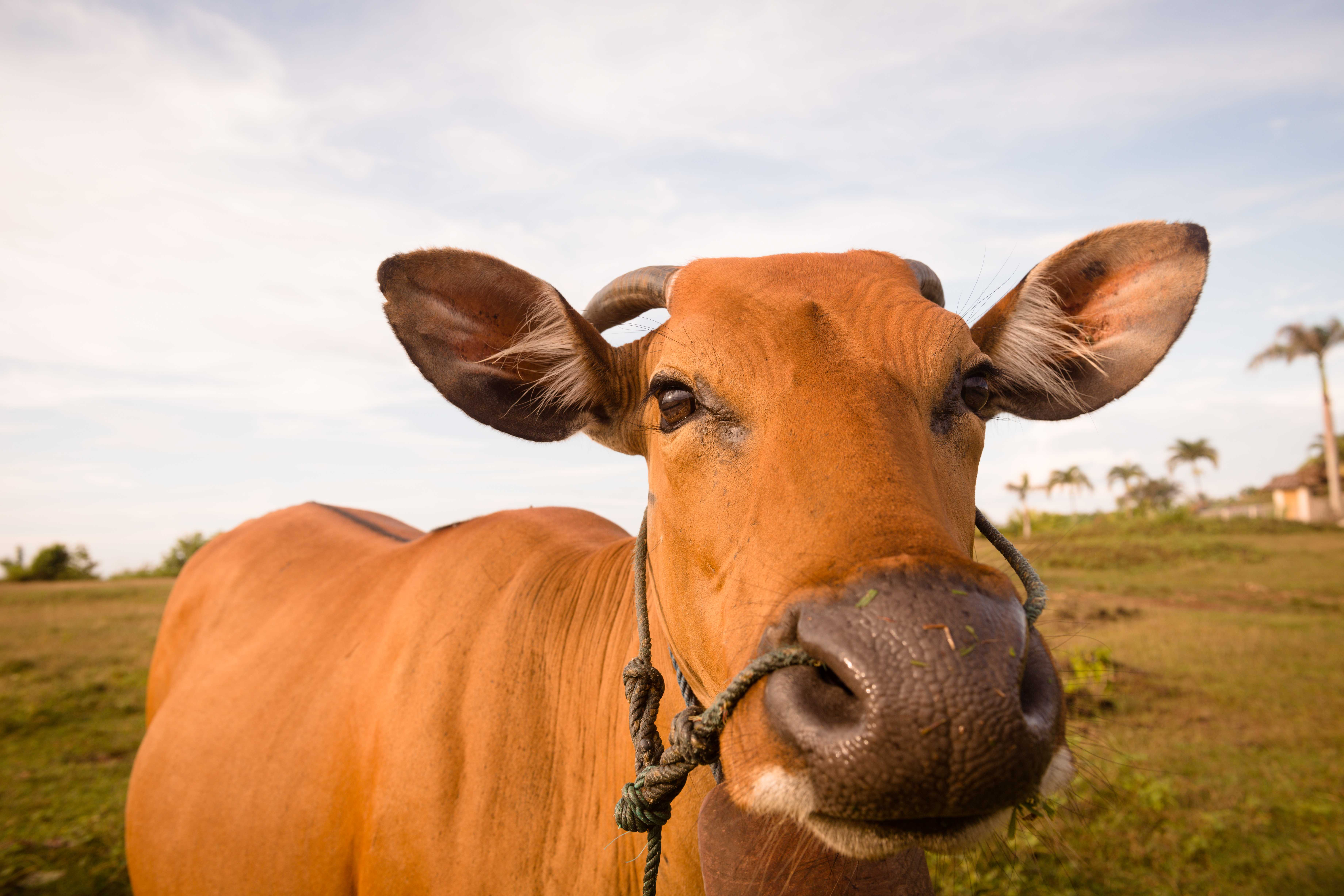 Farm animal biological systems - Digestion in ruminants