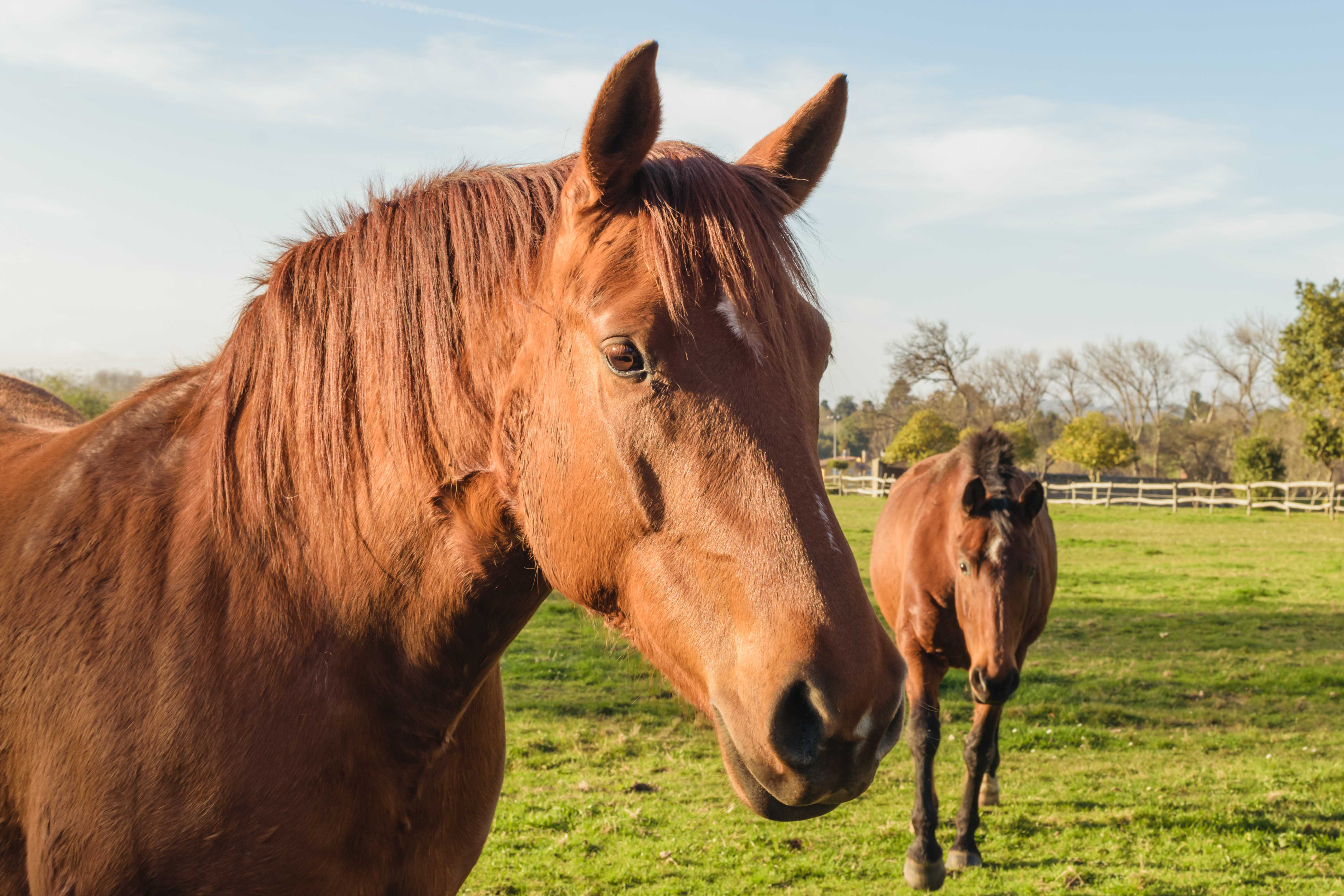Animal health in agriculture - Introduction to animal health