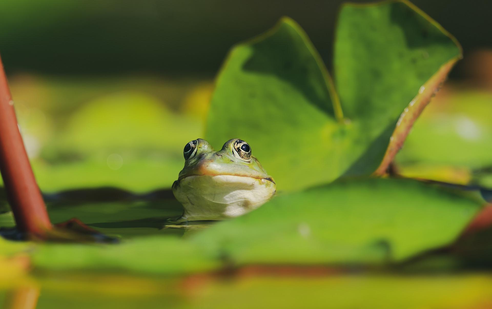Reptile and amphibian surveys