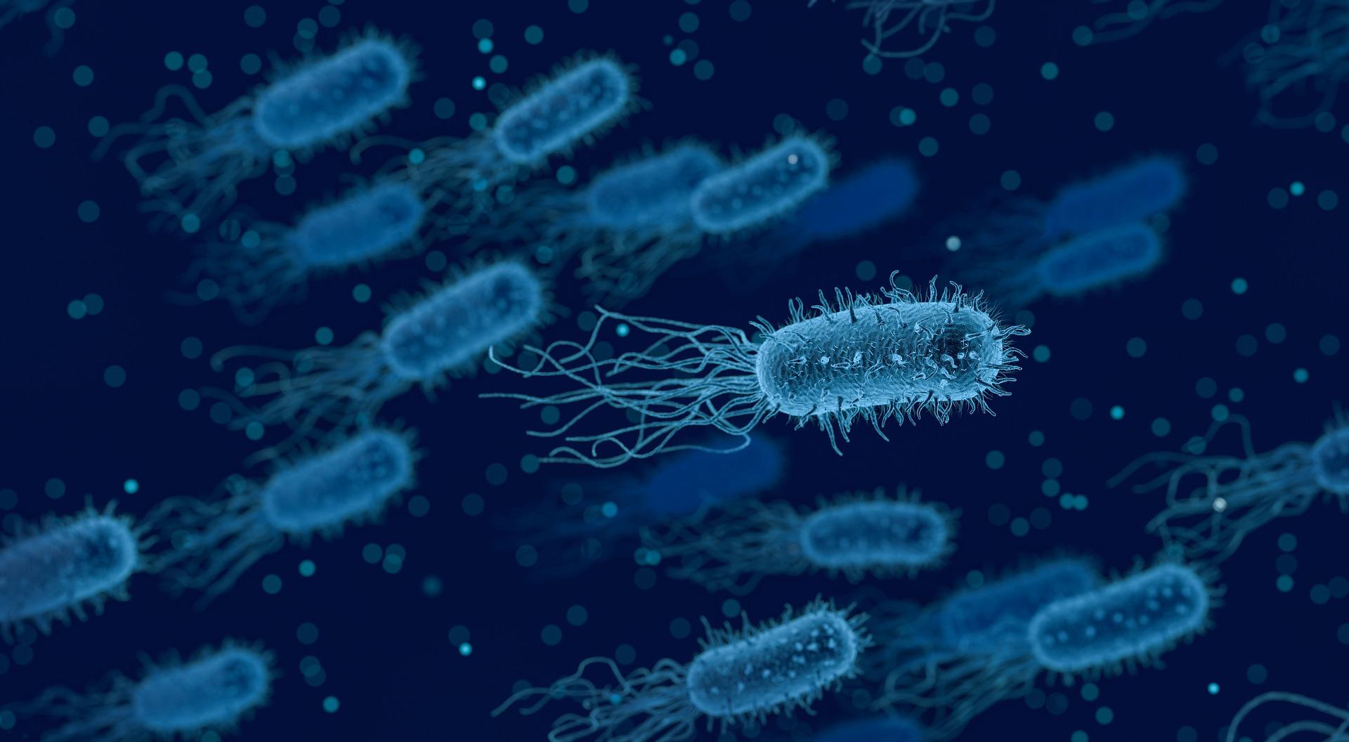 Bacterial viral and fungal diseases