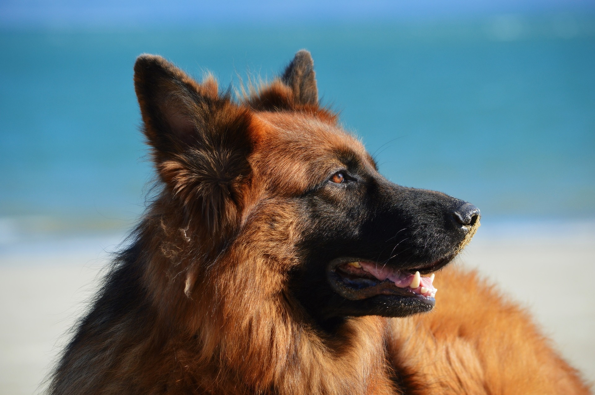 Infectious diseases of dogs