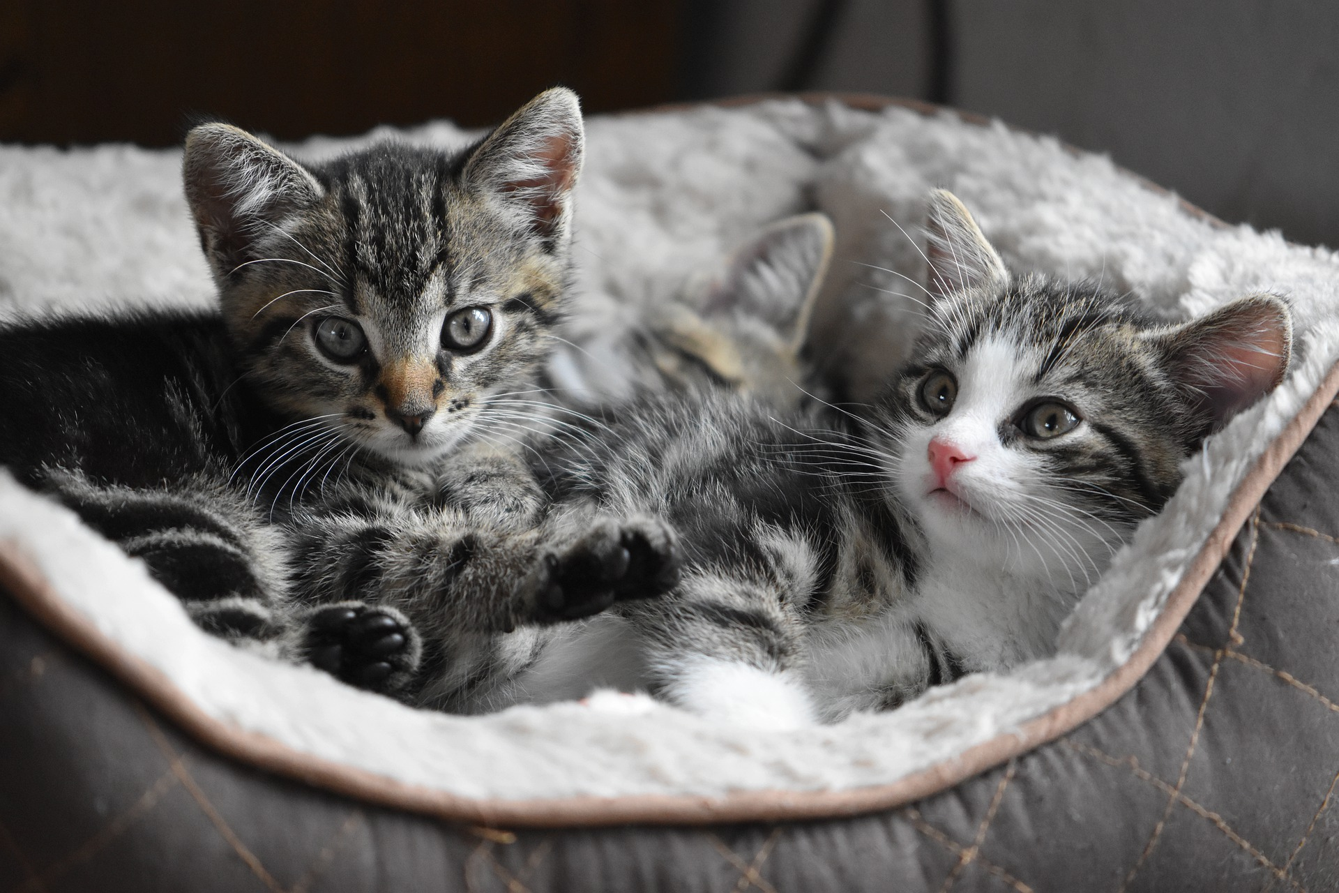 Infectious diseases of cats