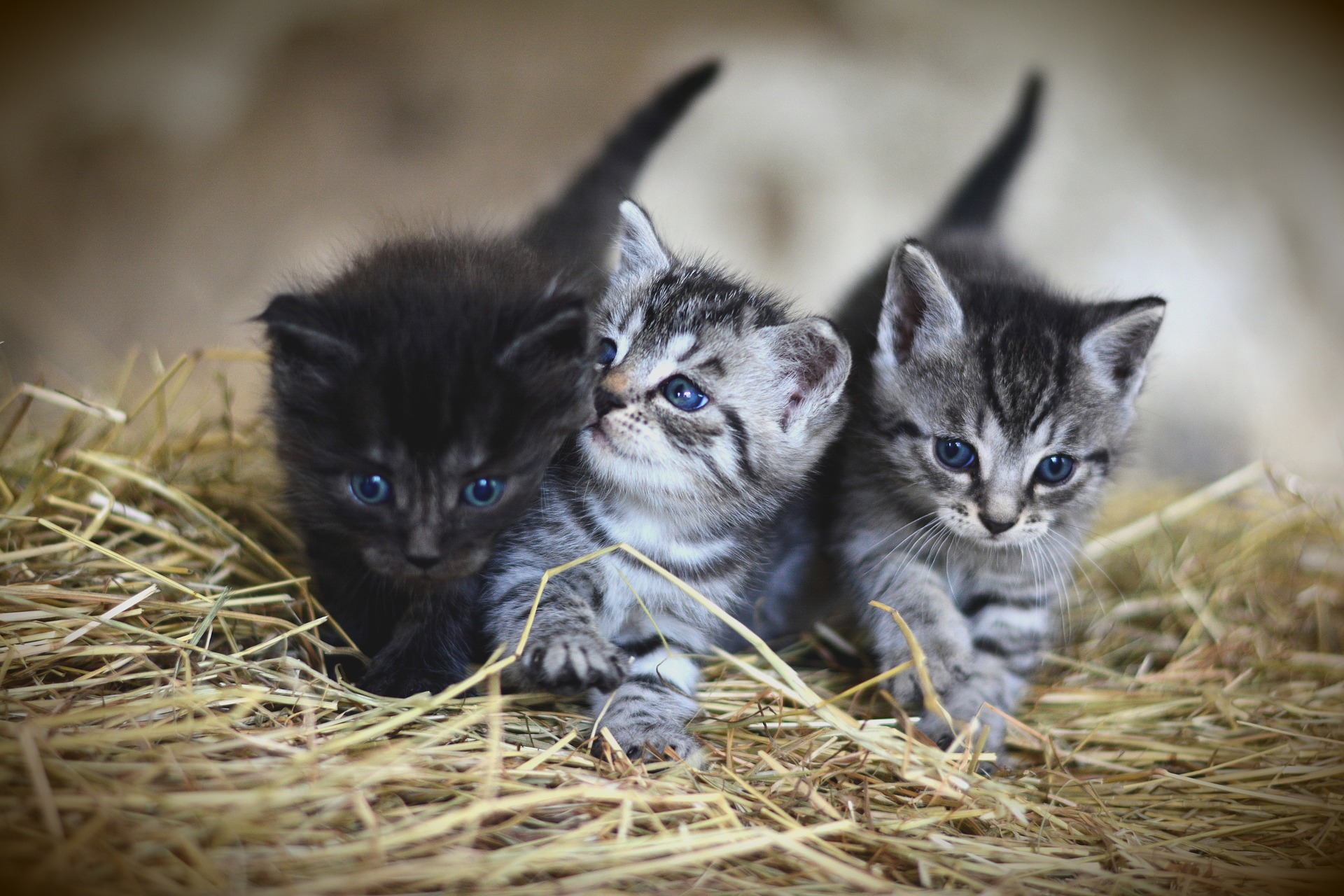 Intro to animal health