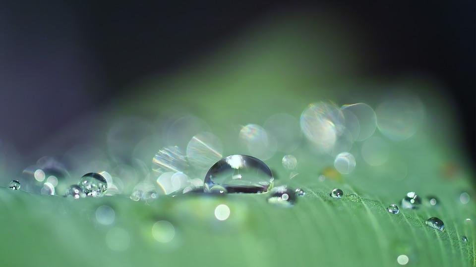 Water uptake, movement and loss